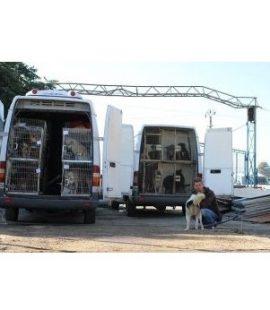 Redding van honden uit Bacau door SOS Dogs