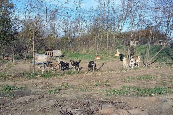 Geredde honden uit Bacau asiel