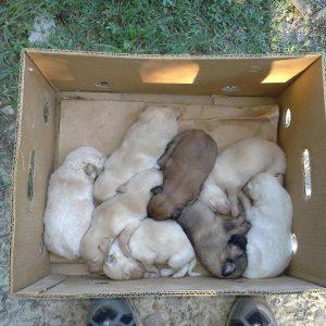 Gedumpte pups