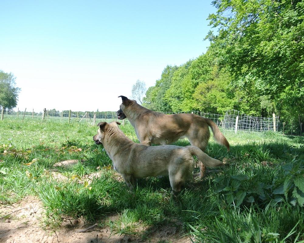 Voormalige zwerfhonden Elfie en Gina