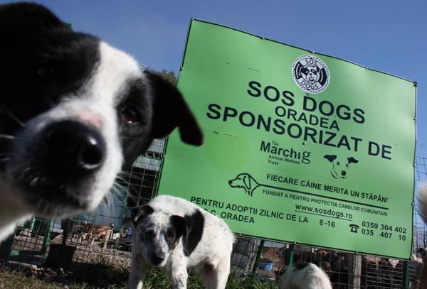 Asiel SOS Dogs in Roemenië