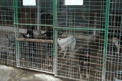 Honden in het asiel in Roemenië
