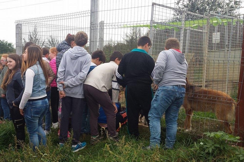 Schoolklas op bezoek in open asiel van SOS Dogs