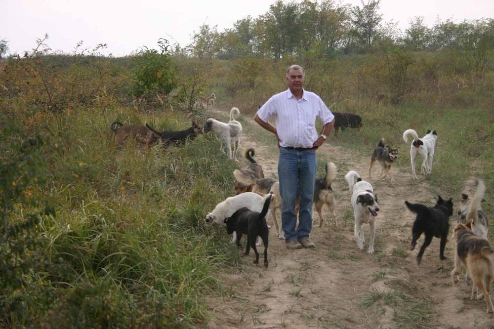 Open asiel SOS Dogs