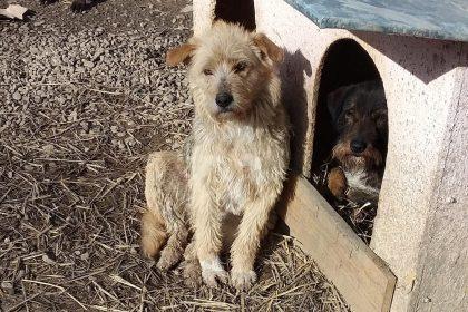 Hond ter adoptie