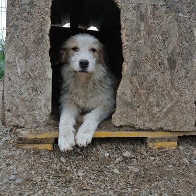 Hond ter adoptie bij SOS Dogs