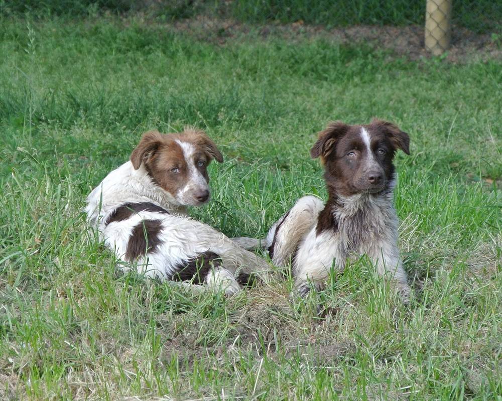 pups ter adoptie bij SOS Dogs