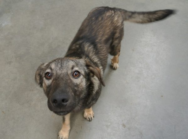 Hondje ter adoptie bij SOS Dogs