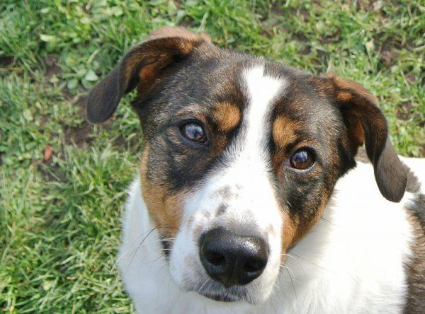 Atena lieve rustige hond