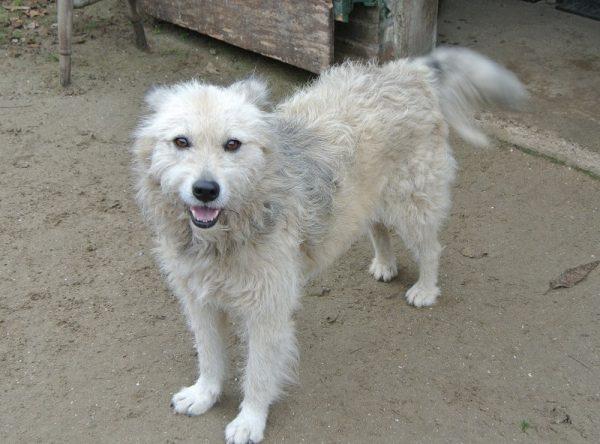 Teefje 5 jaar oud ter adoptie bij SOS Dogs