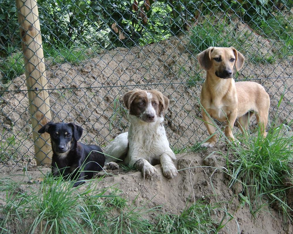 Pups ter adoptie
