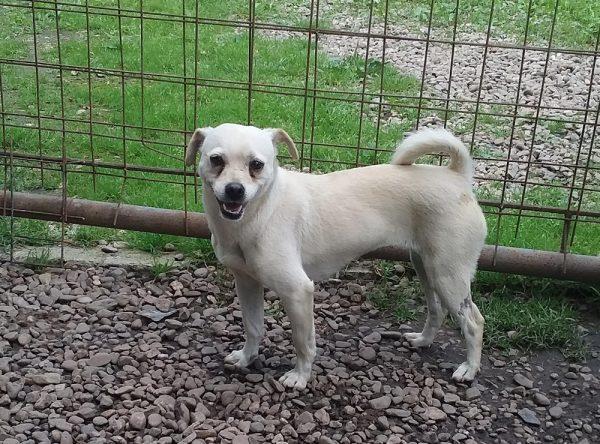 Klein hondje ter adoptie bij SOS Dogs