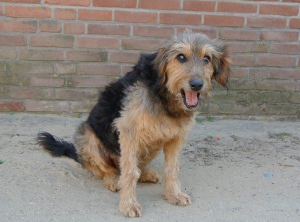 Blinde hond ter adoptie bij SOS Dogs
