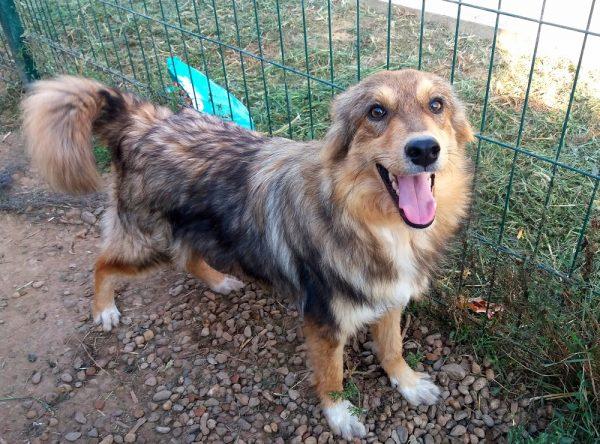 Jong hondje ter adoptie bij SOS Dogs