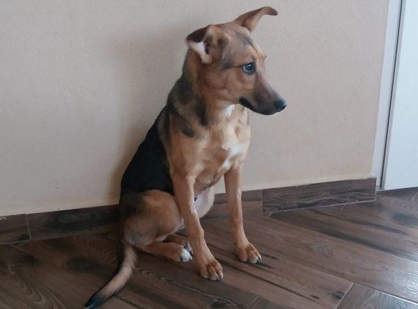 Jonge hond ter adoptie