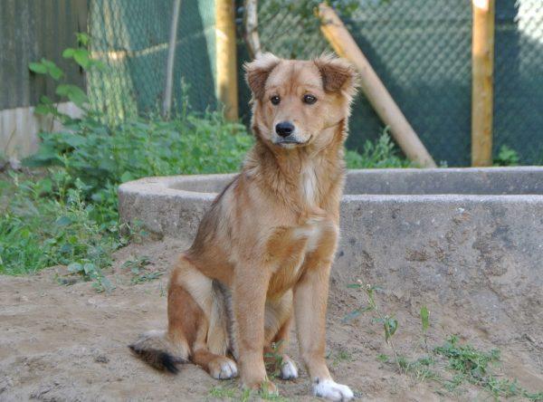 Pup Bella ter adoptie bij SOS Dogs