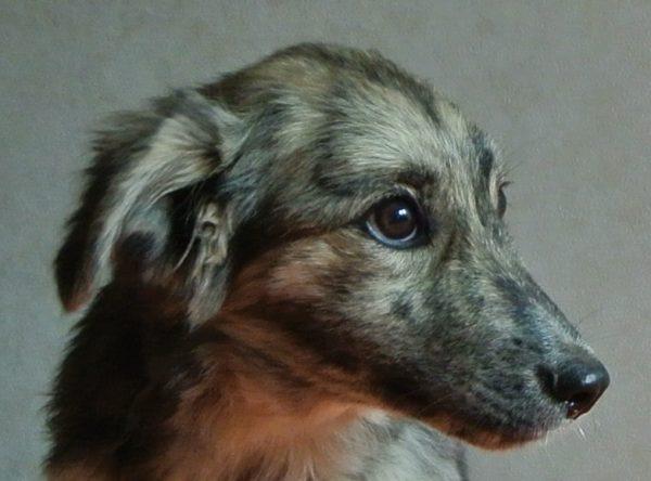 Pup ter adoptie