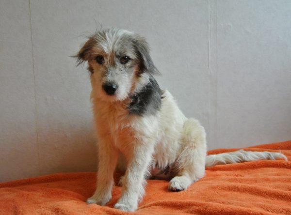 Pup ter adoptie bij SOS Dogs