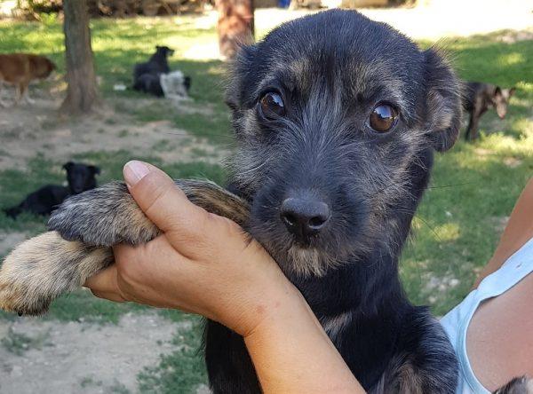 Pupje ter adoptie bij SOS Dogs