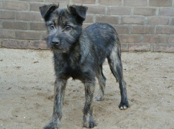 Schattige pup ter adoptie