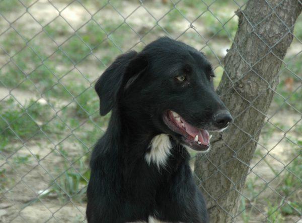 Grote hond ter adoptie bij SOS Dogs