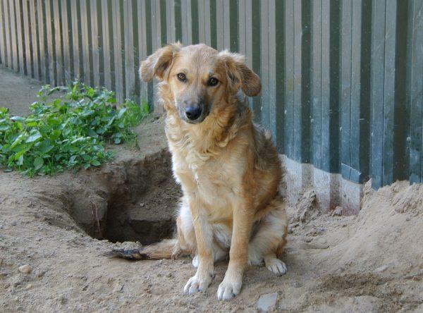 Jonge hond ter adoptie bij SOS Dogs