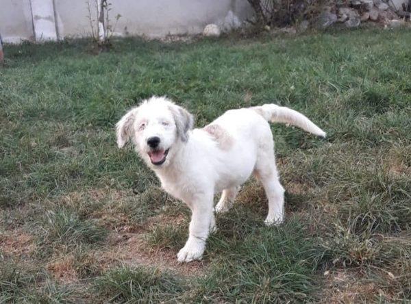 Blinde pup ter adoptie bij SOS Dogs