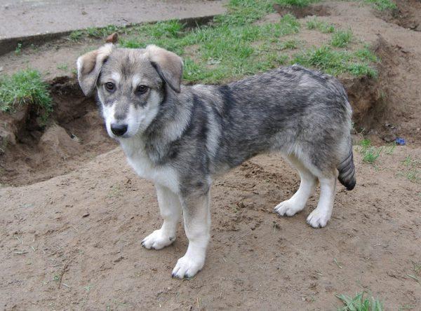 Kleine mix pup ter adoptie