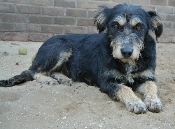 Hond adopteren: Sandy