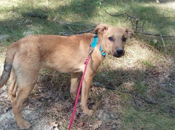 Pup van 7 maanden ter adoptie