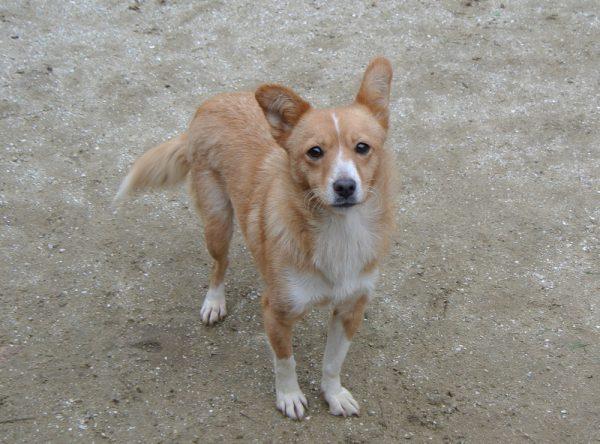 Klein hondje ter adoptie