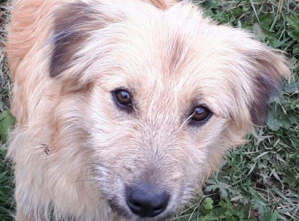 Ruwharig hondje