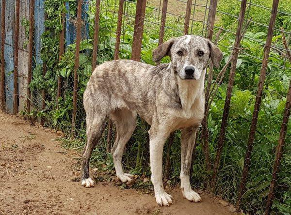 Donita jonge hond ter adoptie
