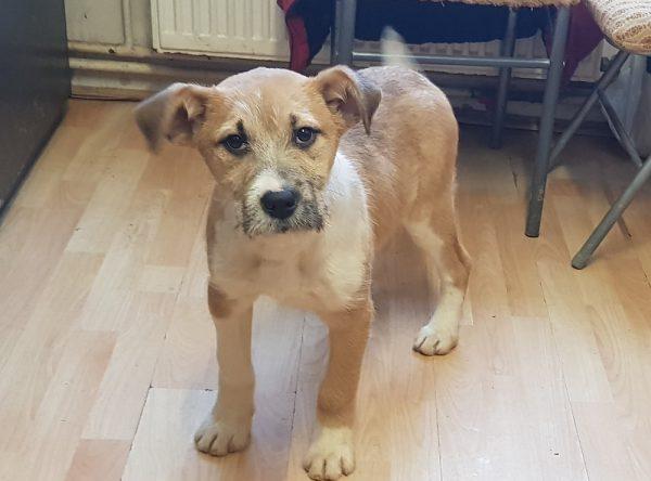 Leuke pup ter adoptie bij SOS Dogs