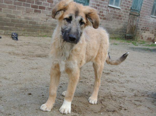 Pup Tess ter adoptie