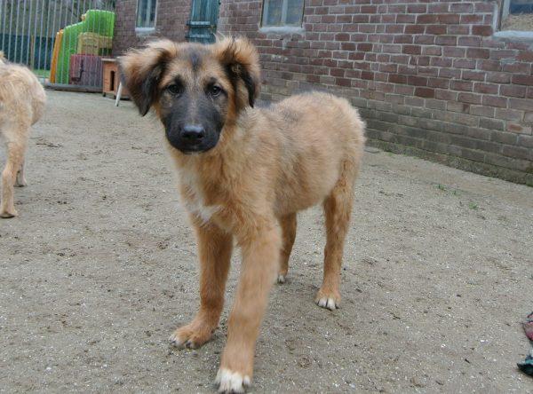 Pup Tim ter adoptie