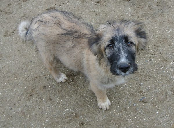 Pup Tito ter adoptie