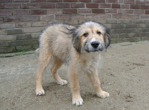 Pup Twix ter adoptie