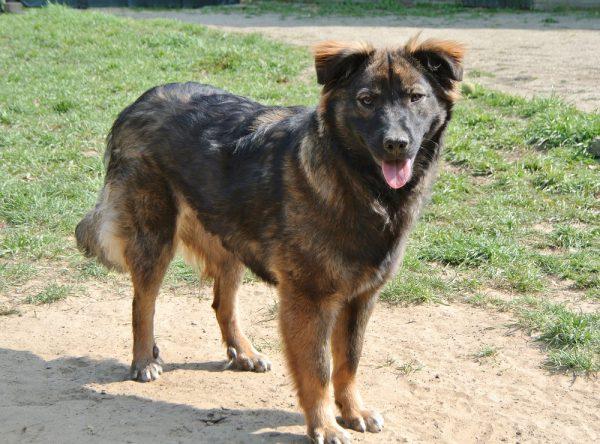 Zara, jonge hond ter adoptie