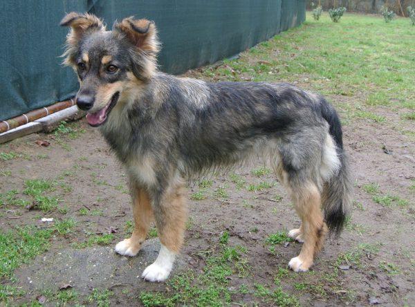 Prachtig jong hondje ter adoptie