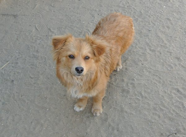 Miki klein hondje 8 maanden