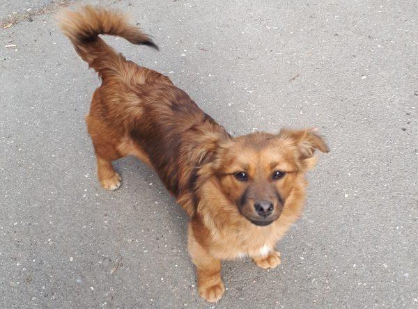 Pup Mindy voor adoptie