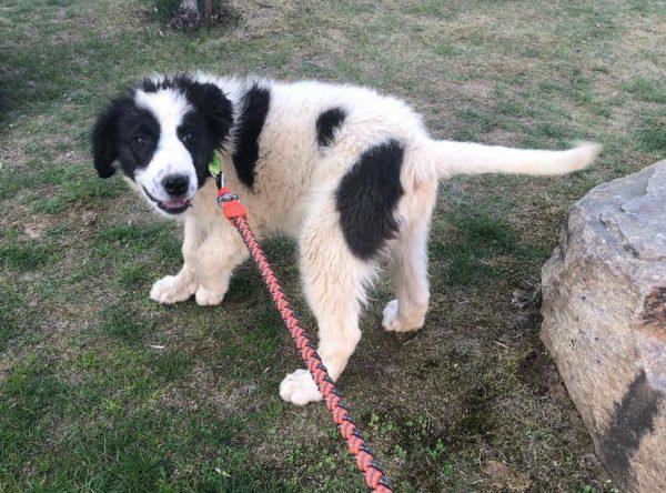 Pup Irma ter adoptie