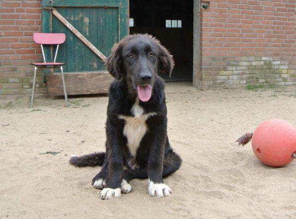 Pup Nero, grote zwarte slungel