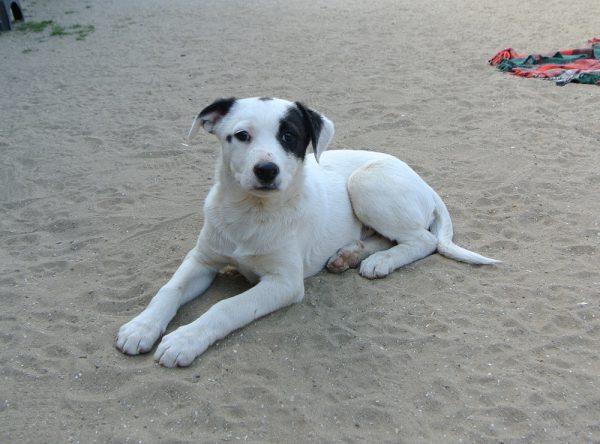 Pup Pablo ter adoptie