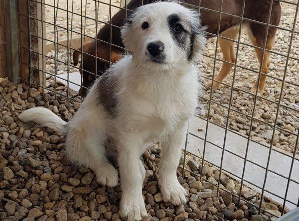 Pup Paco ter adoptie