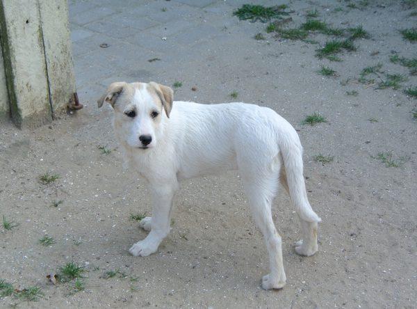 Pup Paris ter adoptie