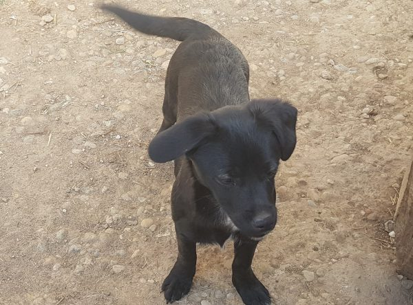 Pup Penny ter adoptie