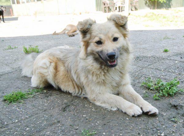 Amy, klein hondje ter adoptie