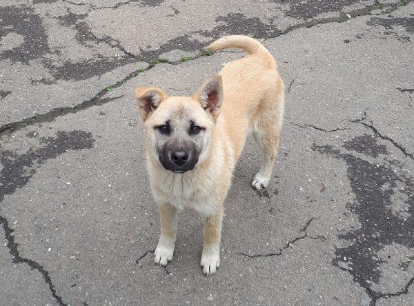 Bo, pup van 6 maanden
